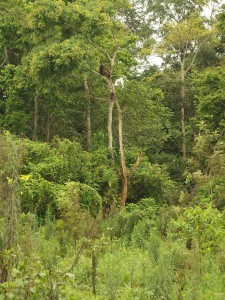 High tropical forest with great bio-diversity in flora and fauna